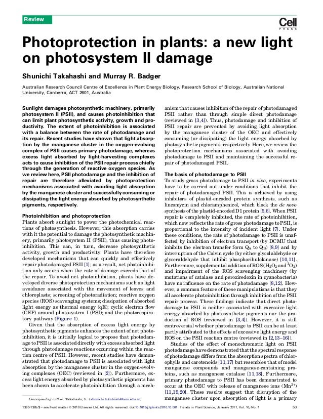 Photoprotection in plants: a new lighton photosystem II damageShunichi Takahashi and Murray R. BadgerAustralian Research C...