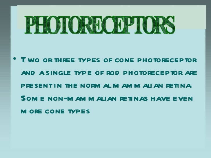 • T wo or three types of cone photoreceptor  and a single type of rod photoreceptor are  present in the norm al m am m ali...