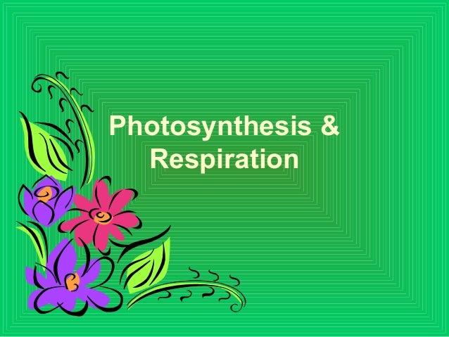 Photosynthesis & Respiration
