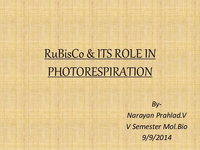 RuBisCo & ITS ROLE IN PHOTORESPIRATION By- Narayan Prahlad.V V Semester Mol.Bio 9/9/2014