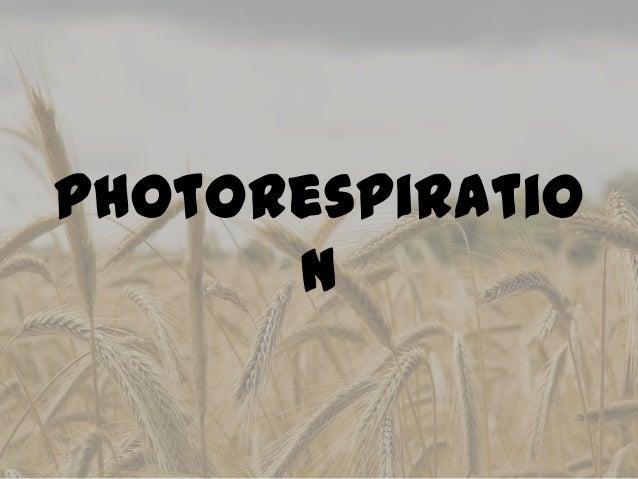 Photorespiratio      n