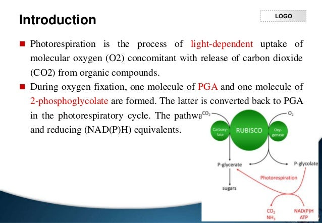 process of photorespiration