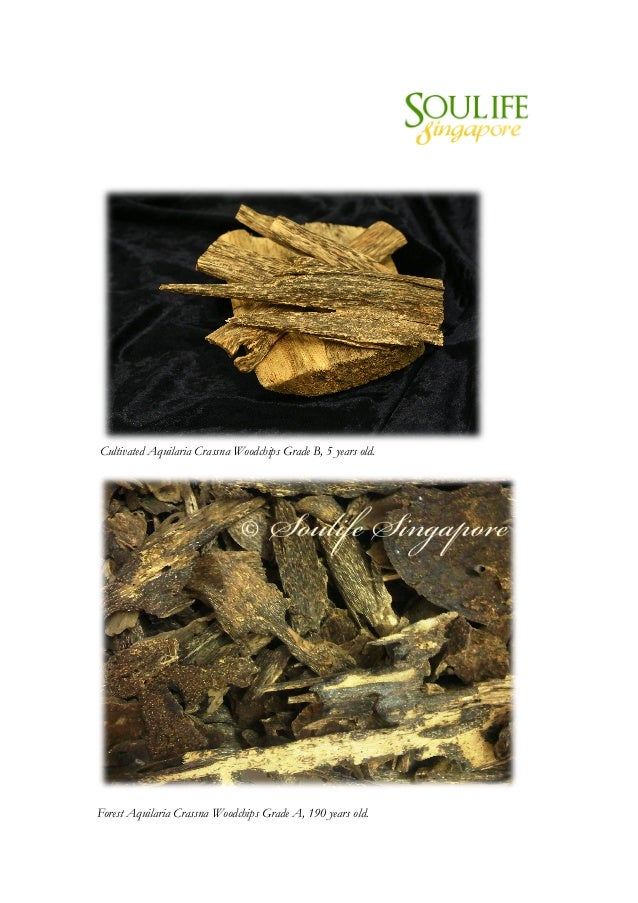 Cultivated Aquilaria Crassna Woodchips Grade B, 5 years old.       Forest Aquilaria Crassna Woodchips...