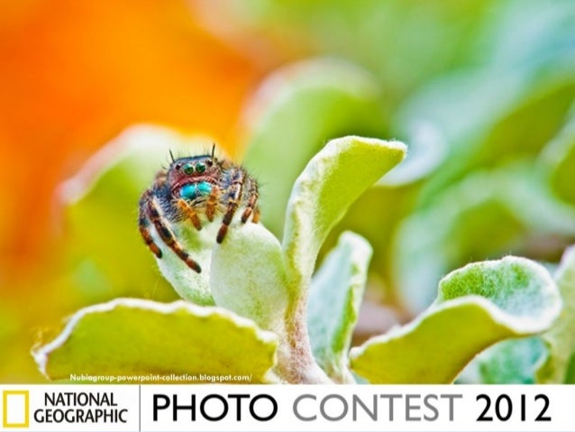 Photos finalistes-au-concours-du-national-geographic-2012