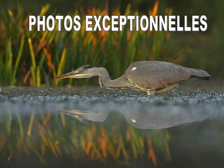 PHOTOS EXCEPTIONNELLES