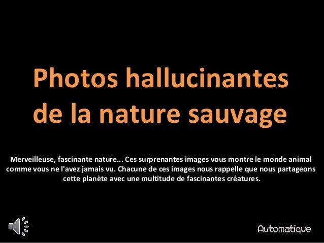 Photos hallucinantes de la nature sauvage Merveilleuse, fascinante nature... Ces surprenantes images vous montre le monde ...