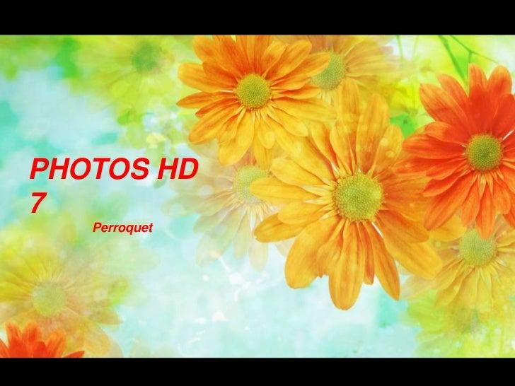 PHOTOS HD 7<br />                  Perroquet<br />