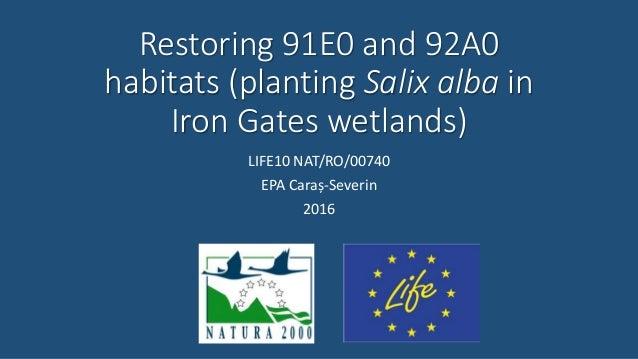 Restoring 91E0 and 92A0 habitats (planting Salix alba in Iron Gates wetlands) LIFE10 NAT/RO/00740 EPA Caraș-Severin 2016