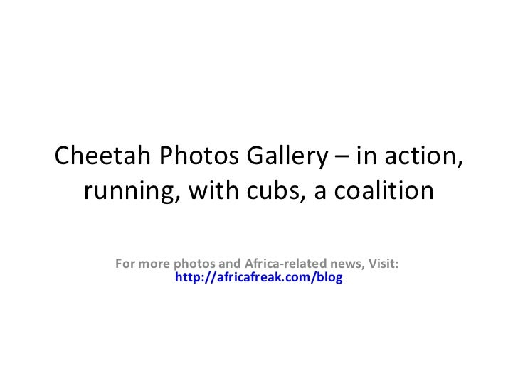 Cheetah Photos Gallery – inaction, running, a coalition  For more photos and Africa-related news, Visit:           http://...