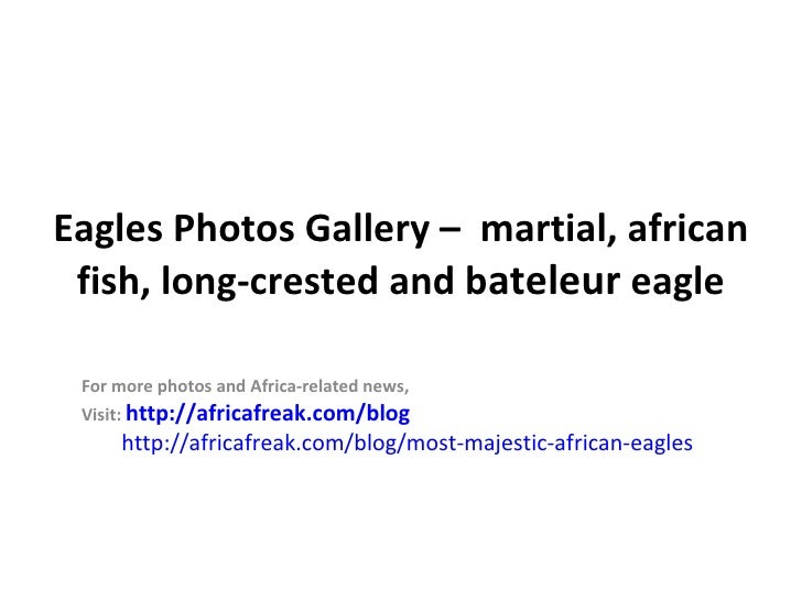 Eagles Photos Gallery – martial, african fish, long-crested and bateleur eagle For more photos and Africa-related news, Vi...