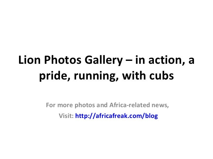 Lion Photos Gallery – in action,           running    For more photos and Africa-related news,        Visit: http://africa...