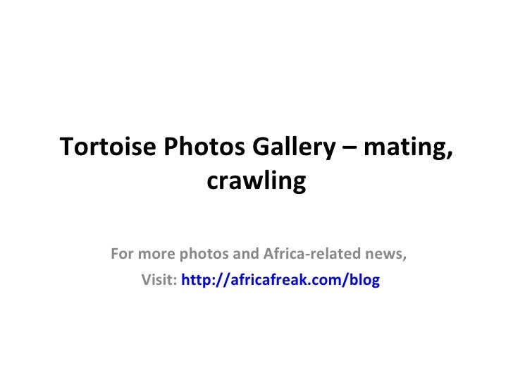 Tortoise Photos Gallery – mating,            crawling    For more photos and Africa-related news,        Visit: http://afr...