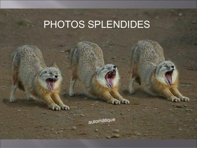 PHOTOS SPLENDIDES  ue automatiq