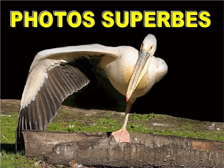 PHOTOS SUPERBES