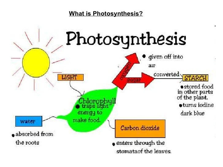 a description of the process of photosynthesis
