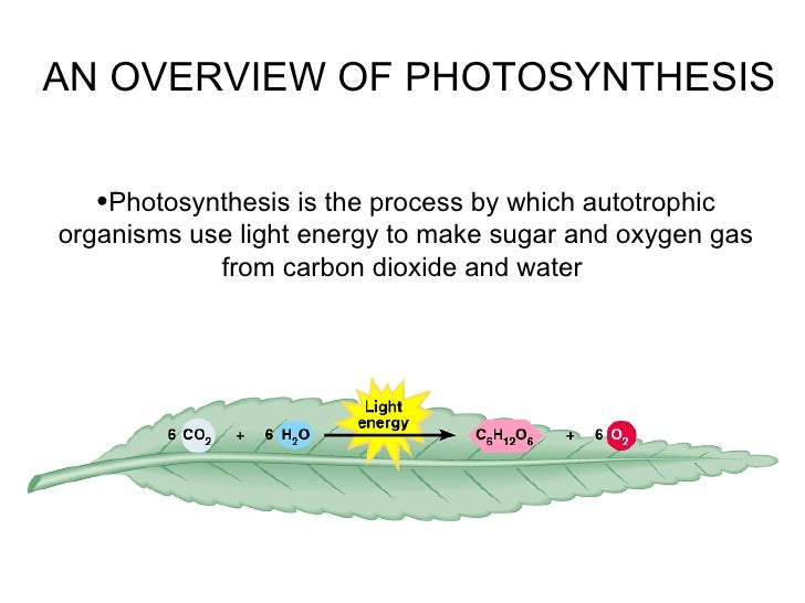 <ul><li>Photosynthesis is the process by which autotrophic organisms use light energy to make sugar and oxygen gas from ca...