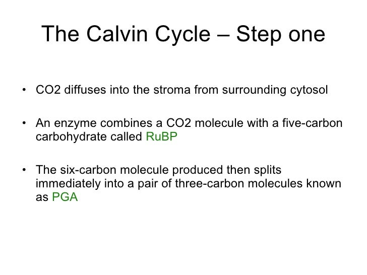 The Calvin Cycle – Step one <ul><li>CO2diffuses into the stroma from surrounding cytosol </li></ul><ul><li>An enzyme comb...