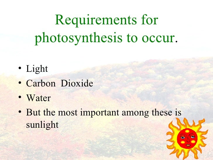Materials Needed for Photosynthesis   Sciencing