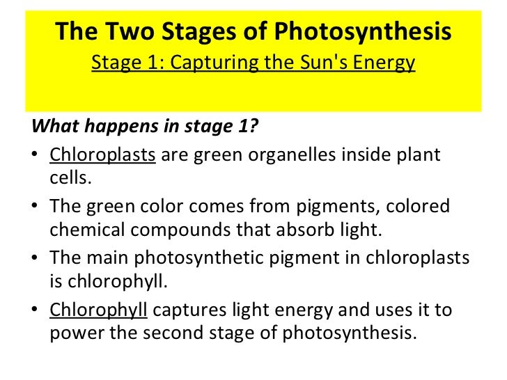 first stage of photosynthesis The first stage of photosynthesis is a light dependent b temperature dependent c glucose driven d atp driven.