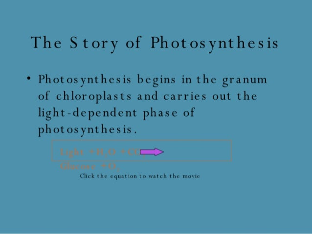 The Story of Photosynthesis  ' Photosynthesis begins in the granum of chloroplasts and carries out the light-dependent pha...