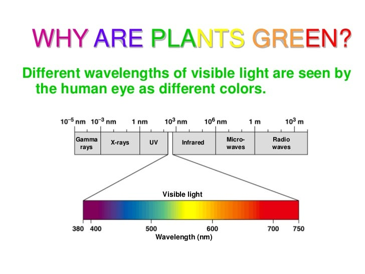 Photsynthesis-what light is seen