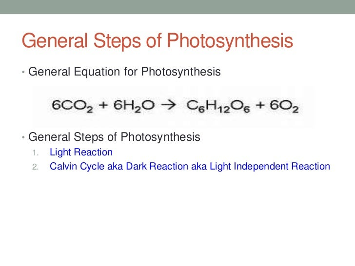 steps of photosythesis