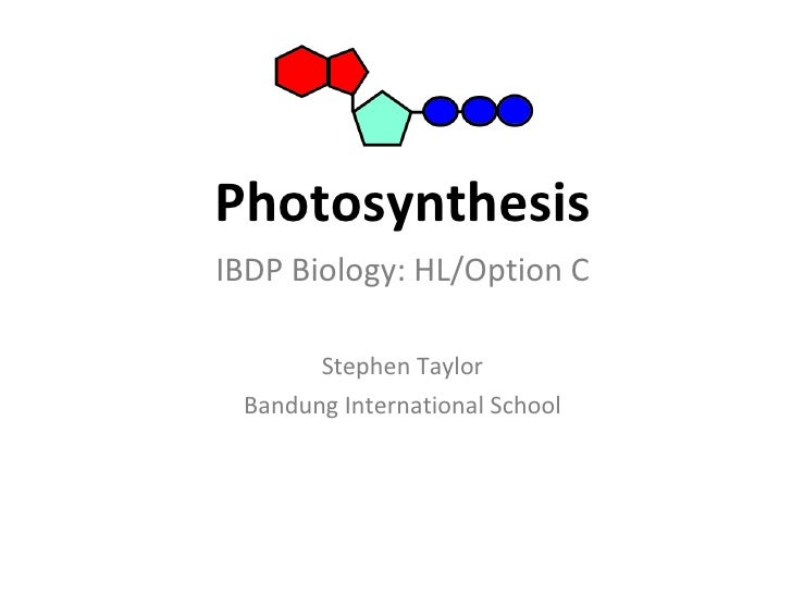 Photosynthesis <ul><li>IBDP Biology: HL/Option C </li></ul><ul><li>Stephen Taylor </li></ul><ul><li>Bandung International ...