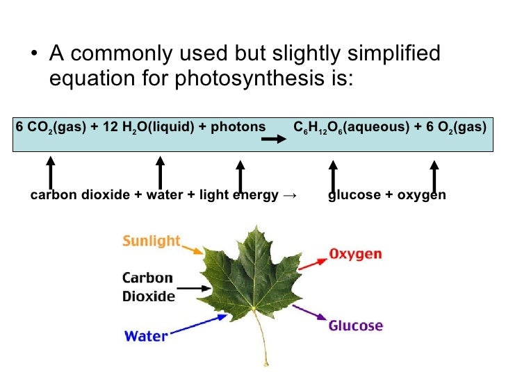 chlorine in photosynthesis Photosynthesis karen f adams burnside scholastic academy 650 east 91st place chicago il 60619 312-535-3300 objectives: (adaptable to grade levels 6-9.