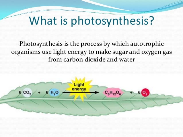 where does photosythesis take place Photosynthesis takes place inside plant cells in small things called chloroplasts  chloroplasts (mostly found in the mesophyll layer) contain a green substance.