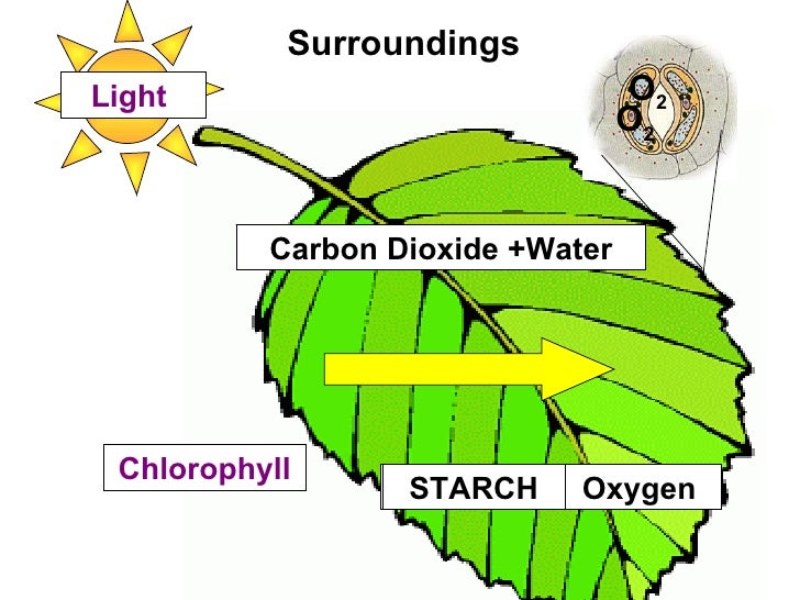 reactions of photosynthesis What is light dependent and light independent reactions in photosynthesis.