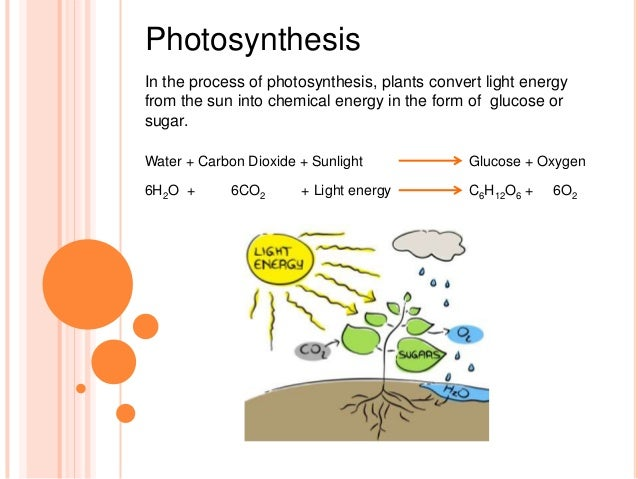 Chemosynthesis chemical database