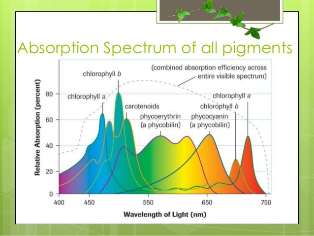 stages of photosythesis Photosynthesis can be represented using a chemical equation the overall balanced equation is 6co2 + 6h2o ------ c6h12o6 + 6o2 sunlight energy where: co2 = carbon dioxide h2o = water light energy is required c6h12o6 = glucose o2 = oxygen continue.