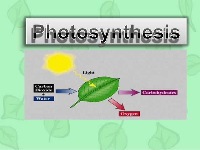 what does photosythesis