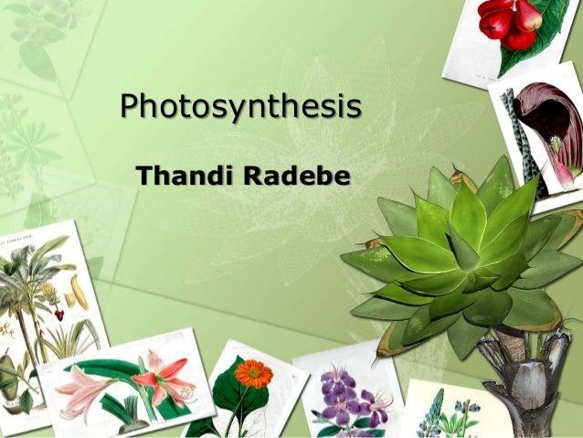 Photosynthesis Thandi Radebe