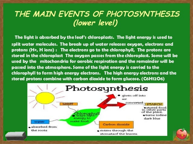 Photosynthesis: The Process Of Photosynthesis Explained (With Diagrams)