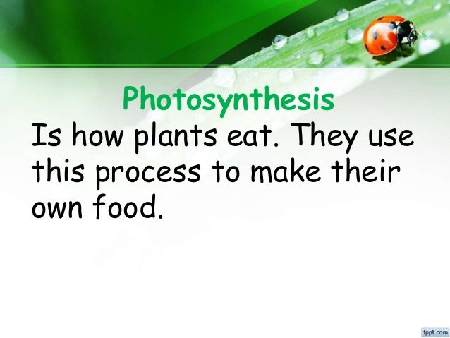 where does photosythesis take place The two stages of photosynthesis: photosynthesis takes place in two stages: light-dependent reactions and the calvin cycle (light-independent reactions) chlorophototrophy can further be divided into oxygenic photosynthesis and anoxygenic phototrophy.