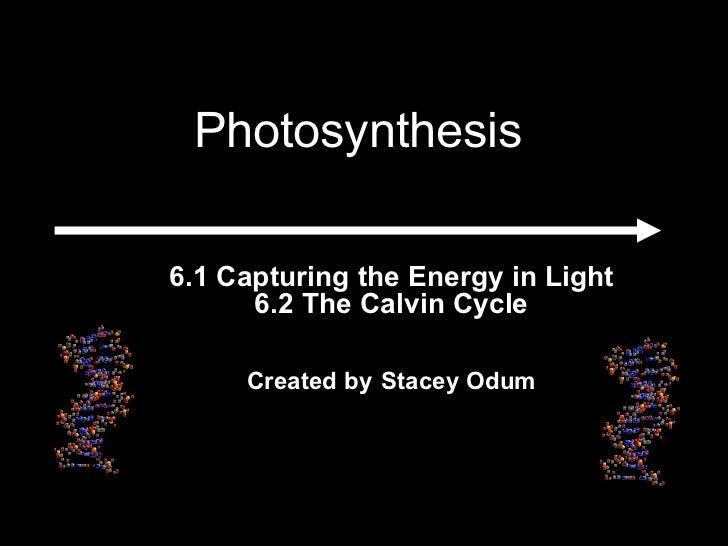 <ul><ul><li>6.1 Capturing the Energy in Light 6.2 The Calvin Cycle </li></ul></ul><ul><ul><li>Created by   Stacey Odum </l...