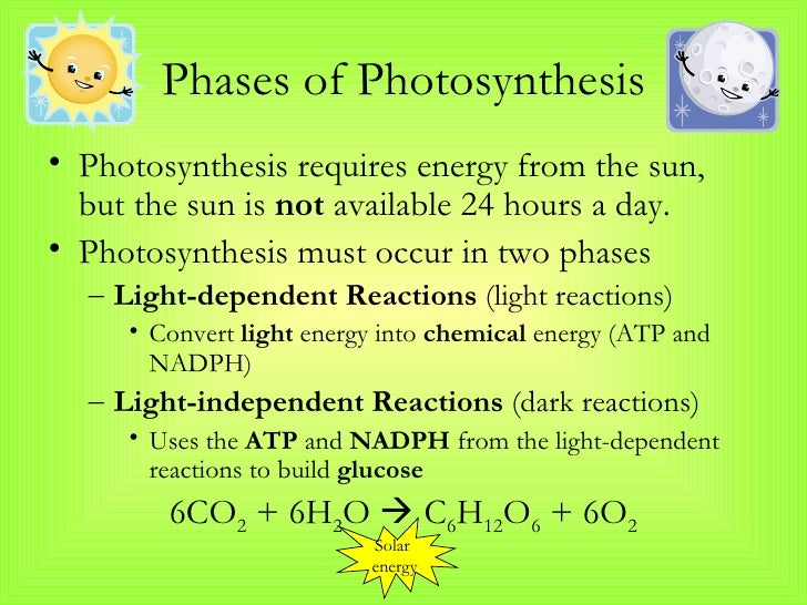 Photosynthesis And Cellular Respiration Notes New