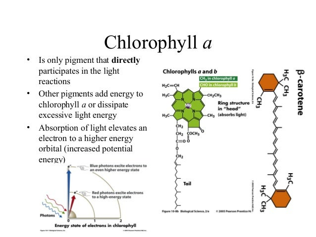 Photosynthesis final xanthophylls 12 ccuart