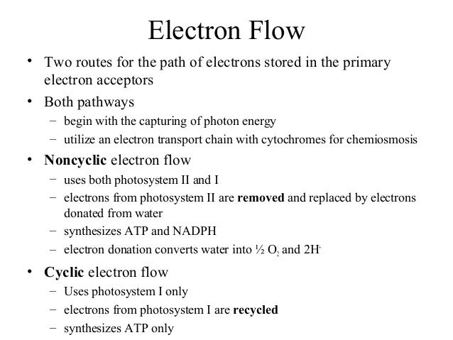 Electron Flow • Two routes for the path of electrons stored in the primary electron acceptors • Both pathways – begin with...