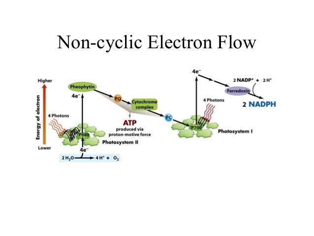 Non-cyclic Electron Flow