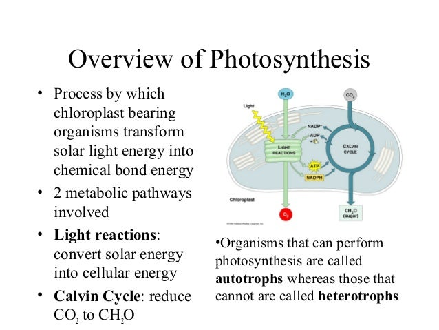 Overview of Photosynthesis • Process by which chloroplast bearing organisms transform solar light energy into chemical bon...