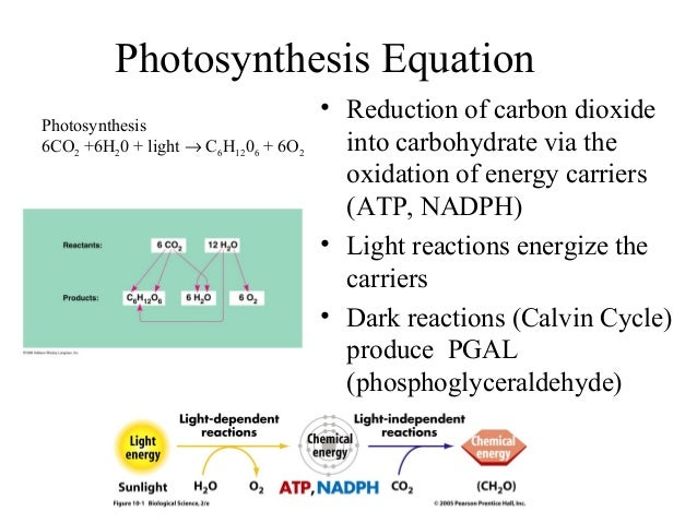 Photosynthesis Equation • Reduction of carbon dioxide into carbohydrate via the oxidation of energy carriers (ATP, NADPH) ...