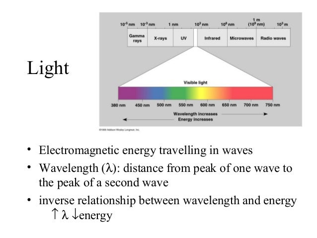 what is the relationship between light and dark reactions