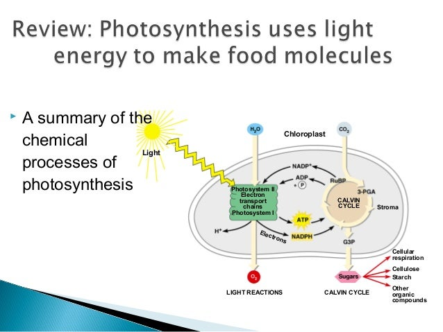 Photosynthesis process light and dark reactions thank you ccuart Image collections