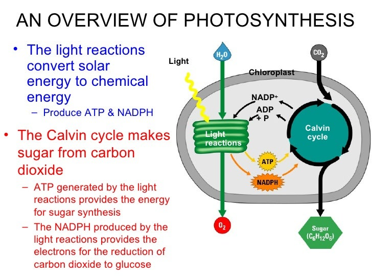 photosynthesis chemical reaction
