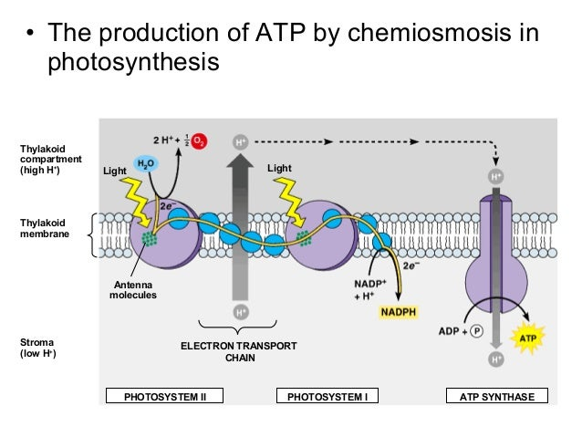 Welcome to ATP synthase web page!