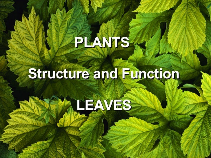 PLANTS  Structure and Function LEAVES