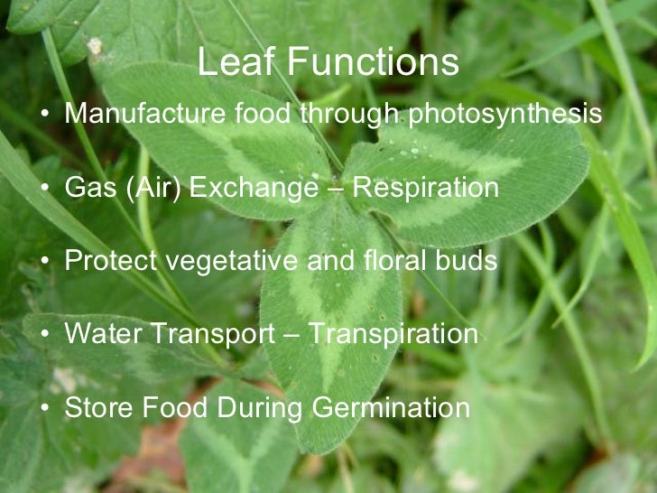 Image result for leaves function