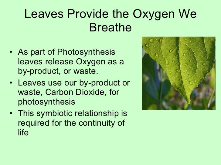 leaf structure and function pdf